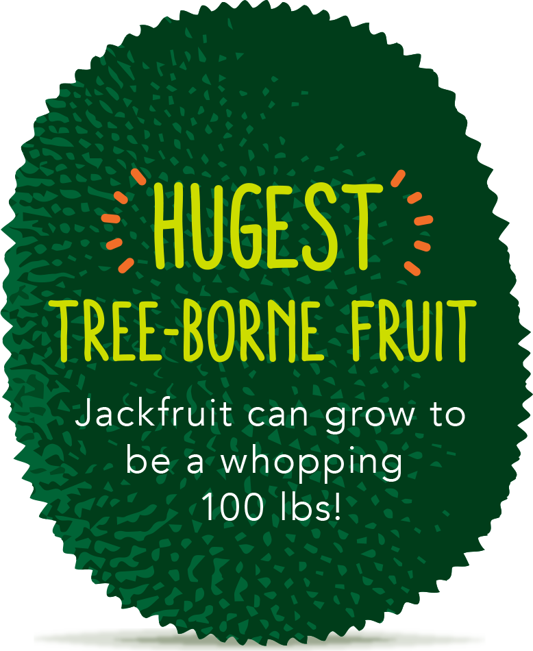 Jackfruit is the largest tree-borne fruit